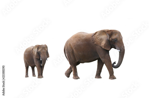 Papiers peints Afrique Elephant cow with baby elephant on white background