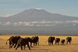 Fototapety Kilimanjaro mit Elefantenherde