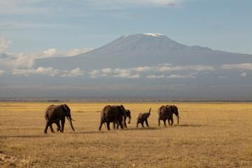 Kilimanjaro mit Elefantenherde