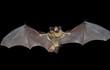 Bat 9