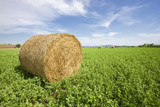 Wrapped trefoil (lucern) bale in field