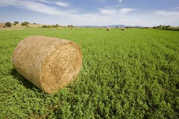Wrapped trefoil (lucern) bale in field