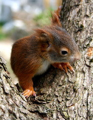 Eichhörnchenbaby auf Baum