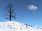 Winter Tree on a snowy hill