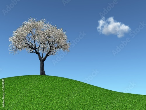 Blossoming Cherry Tree on a grassy hill