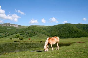 Paysage sur les monts du Cantal
