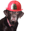 Labrador firefighter