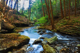 Fototapety River in forest