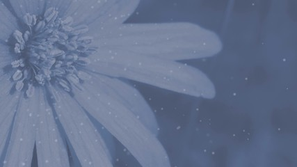 Blume mit Pollenflug - Animation