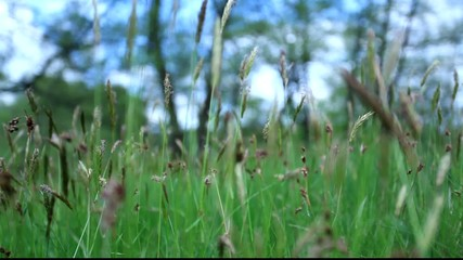 glide out in field of grass