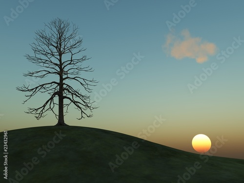 winter tree on a hill at sunset