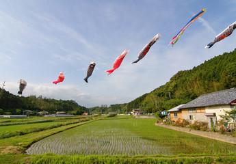 Japanese koi nobori wind socks  above a rice field.