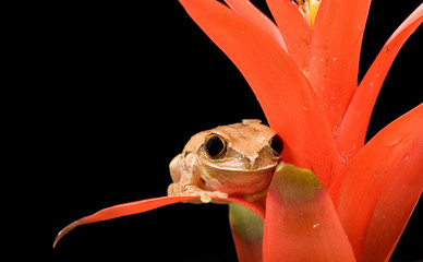 Marbled Reed Frog on Plant