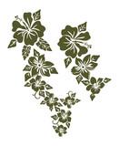 Hibiscus kvetinový dizajn