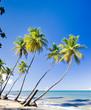 Northern coast of Trinidad; Caribbean