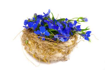 Vogelnest mit Blüten