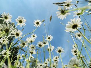 Blumen, Blumenwiese
