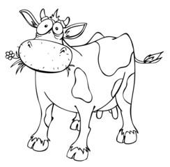 Kuh, Rind, überrascht, verwirrt, Futter, Viehhaltung