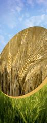 Getreide - Cover