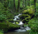 Fototapety Mossy waterfall