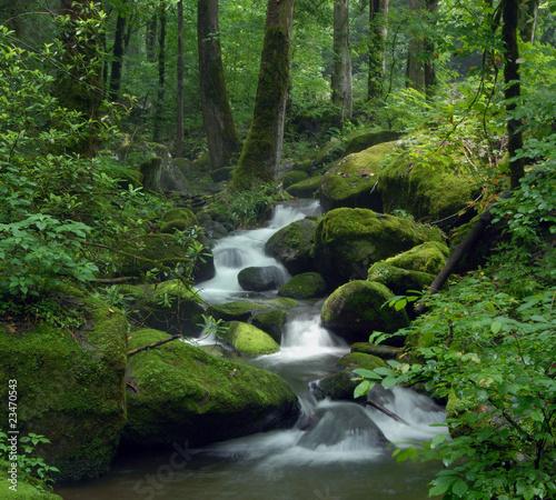 Moosiger Wasserfall