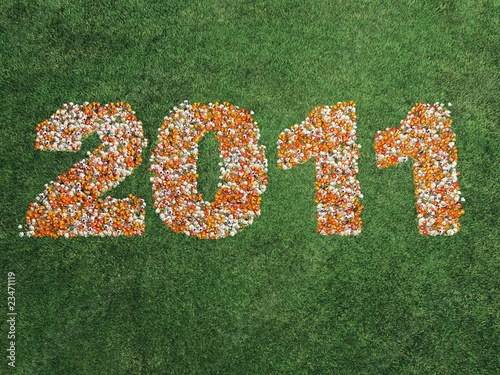 2011 in flowers on grass