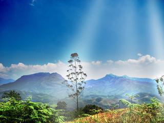 Misty hills in Munnar
