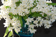 Deutzia in a blue vase