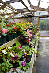 Potted Flowers in Greenhouse