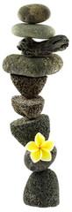 empilement zen galets, fleur et bois flotté, fond blanc