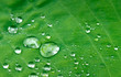 Drops on green leaf