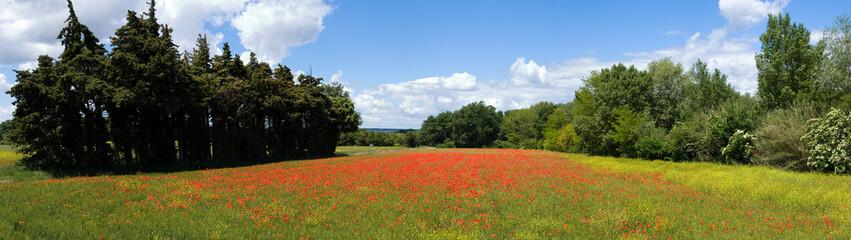 champ de coquelicot dans la campagne
