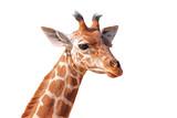 Fototapety Détourage de la tête d'une jeune girafe