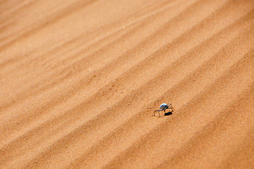 Beetle in the Sand