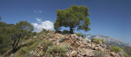panoramic view of the tree on the rocky hill.
