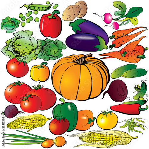 Collection of different vegetables on a white background.