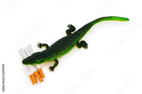 Crocodile with cigarettes isolated on white