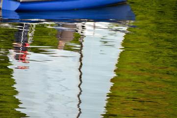Segel im Wasser. Spiegelung