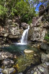 tropical river in the rain forest queensland australia