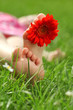 Füße mit Gerbera