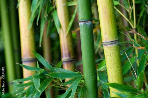 Fotobehang Bamboo Zen bamboo
