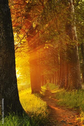 Fototapeten,sunrise,reisen,pewter,park