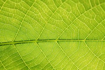 grünes Leben - grünes Blatt