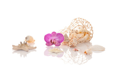 Muscheldekoration mit Orchidee