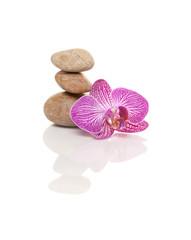 Steinturm mit Orchidee
