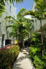 Miami Beach Alley