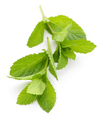 Mint sprigs