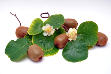 Kiwi - ramo di frutti e fiori
