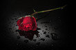 red rose, wet black surface