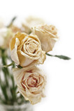 old dried white roses